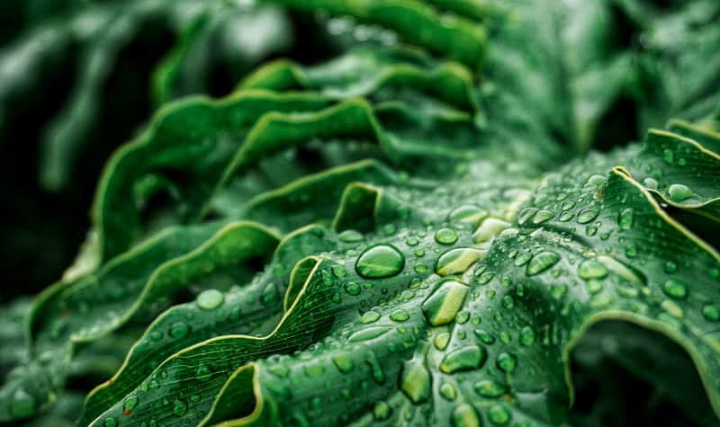Closeup of dark green leafy vegetables that promote strong teeth